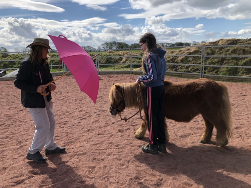 HELPING HORSES WITH THEIR ANXIETY