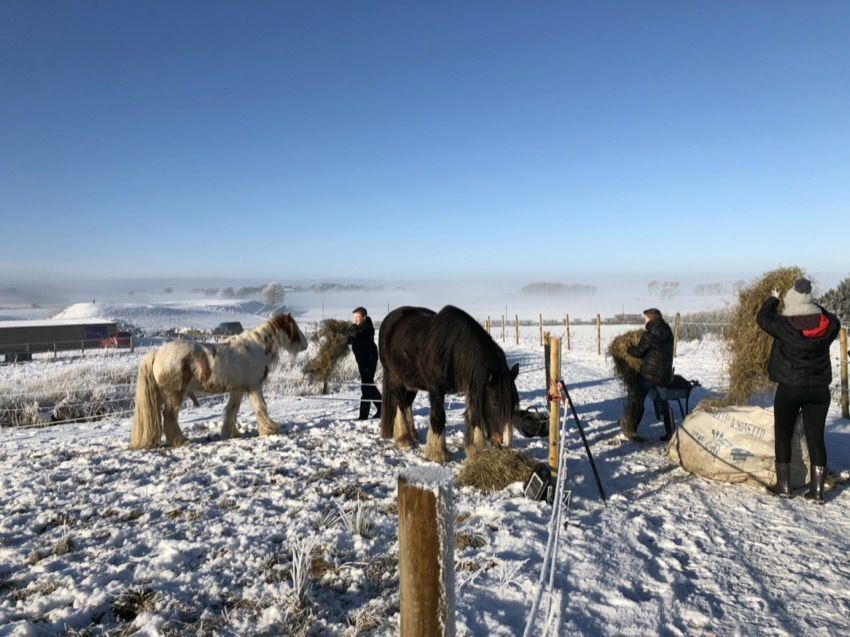 BEST PIC - Feeding herd in the snow