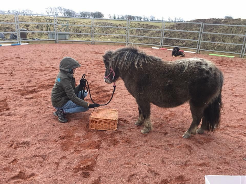 DARCY'S EQUINE ASSISTED LEARNING 02