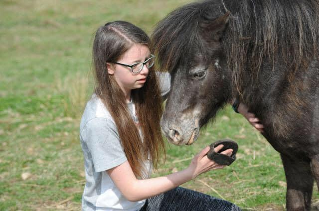 DARCY'S EQUINE ASSISTED LEARNING 12