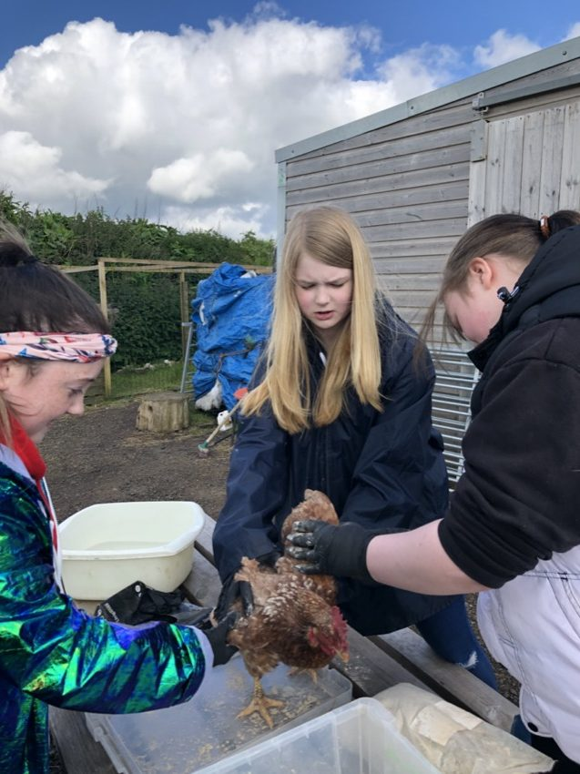 TEAM CARING FOR INJURED CHICKEN