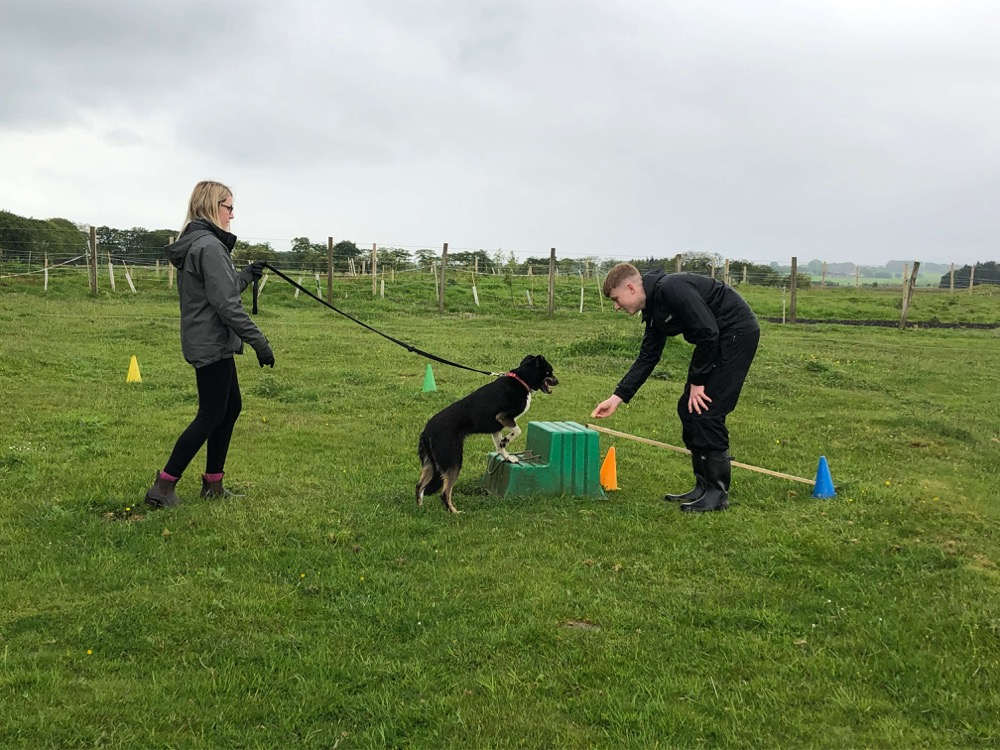 THE DOGS ENCOURAGING SHARED ACTIVITIES